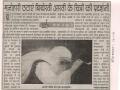 art-r-dainik-bhaskar-26